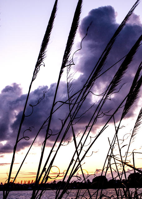 Cloudy Grasses