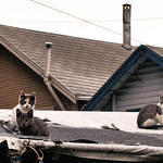Rooftop Kittens