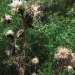 Spiky Weeds